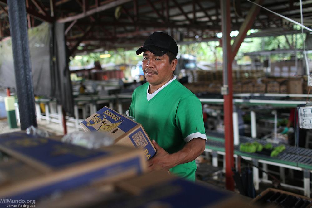 Ernesto Abrego, Ngäbe member of COOBANA, stacks fair-trade banana boxes before they are loaded into a truck. COOBANA, Finca 51, Changuinola, Bocas del Toro, Panamá. September 3, 2012.