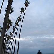 Bicycle rider in bike path. Santa Barbara, CA. USA.