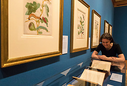 Colourful illustrations that brought the wonders of South America to Europe in the early 18th century are going on display in a new exhibition opening at The Queen's Gallery, Palace of Holyroodhouse tomorrow (Friday, 17 March). Marking the 300th anniversary of the death of intrepid German artist and scientist Maria Sibylla Merian, Maria Merian's Butterflies brings together some of the finest images of the natural world ever made, with more than 50 works going on display in Scotland for the first time.<br /> <br /> Among the works on display are luxury versions of the Metamorphosis plates, which were partially printed and then hand-painted onto vellum. The images were acquired by George III for his scientific library in Buckingham House (later Buckingham Palace) and are today part of the Royal Collection.<br /> <br /> Pictured: Exhibition Curator Kate Heard