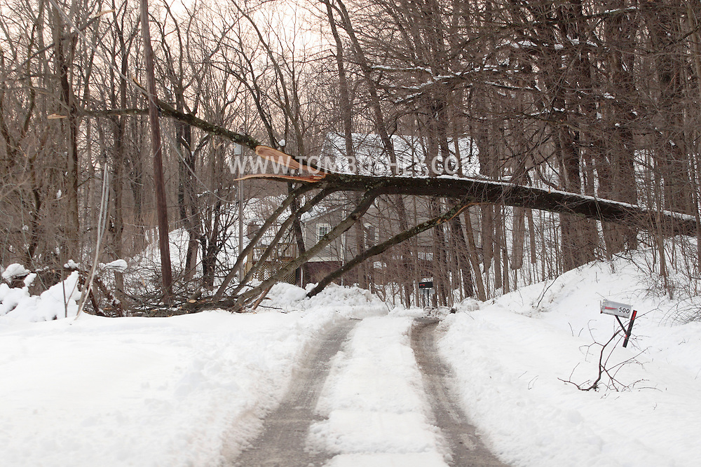 Washingtonville, NY - A fallen tree that took down power lines blocks Hulsetown Road after  snow storm on  Feb. 27, 2010.