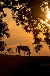 Sunset over Schepdaal 2013 <br /> 127. Hannoveraner Elite-Auktion - Verden 2012<br /> © Hippo Foto - Dirk Caremans<br /> 25/07/13