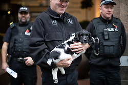 © Licensed to London News Pictures . 11/11/2018. Manchester , UK . A police sniffer dog in training is brought out to acclimatise it to working in public . Preparations are made ahead of a service of remembrance for those killed in war to be held at 11am at the Manchester Cenotaph in St Peter's Square , on the 100th anniversary of Armistice Day , marking the end of the First World War . Photo credit : Joel Goodman/LNP