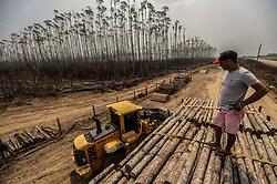 August 25, 2019, Amazonas, Brazil: Destroyed eucalyptus plantation after fire in Humaita, the state of Amazonas, Brazil. (Credit Image: © Gabriela Bil/Xinhua via ZUMA Wire)