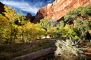 Scenic Photo of Zion National Park in Utah