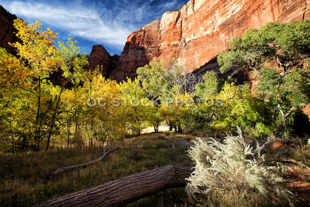 Scenic Photo of Zion National Park in Utah