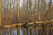 Vernal Pool - Delmarva Bay; seasonal wetland; DE, New Castle Co., Blackbird State Forest; winter;