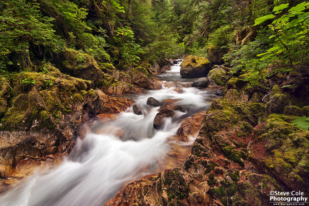 Through the Forest - North Fork Nooksack River Valley