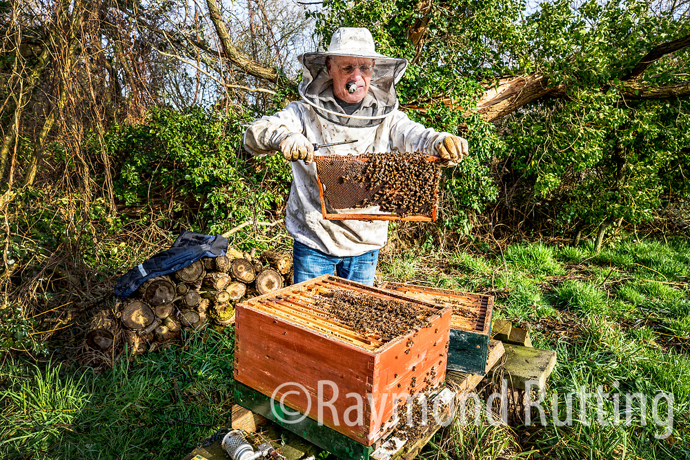 Netherlands - warnsveld- Amateur beekeeper Jan ter Beek from the Netherlands there are thousands of amateur beekeepers nationwide in The Netherlands