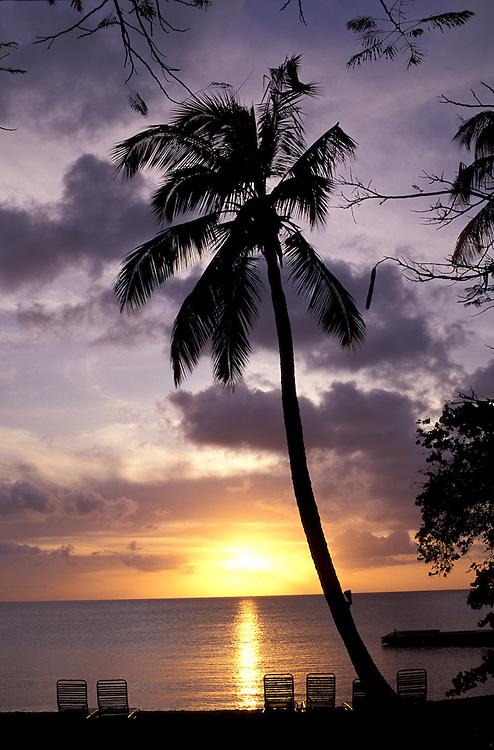 Sunset with Palm Tree at Hawksbill Beach Resort, Antigua, Caribbean