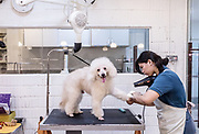 Singapore, Petopia,  Singapore's finest Holistic Pet Wellness Centre, offering animal companions the best in styling, grooming, spa, therapy and pet hotel services. photographis set. pet grooming