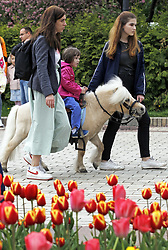 May 4, 2019 - Kiev, Ukraine - A little girl rides a ponie near bloomed tulips in a park in central Kiev, Ukraine, on 4 May 2019. (Credit Image: © Serg Glovny/ZUMA Wire)