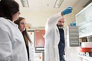 Ronan Carroll (Right), Assistant Professor in the department of Biological Sciences, works with lab students Rachel Zapf (Left) and Rebecca Keogh (Center) in his lab in the Life Sciences Building on the Athens campus. © Ohio University/ Photo by Ben Siegel