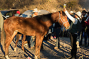 Student veterinarians staff an emergency clinic for horses injured in the three-day ride to Cubilete Mountain at the end of the annual Cabalgata de Cristo Rey pilgrimage January 6, 2017 in Guanajuato, Mexico. Thousands of Mexican cowboys and horse take part in the three-day ride to the mountaintop shrine of Cristo Rey.
