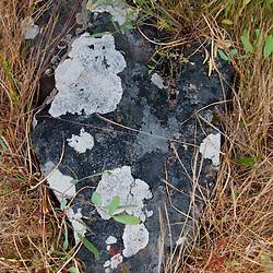 Rock and Lichens, Yellow Island, San Juan Islands, Washington, US