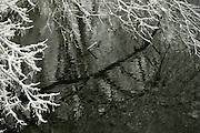 Snow Covered Trees in Winter, Stockbridge