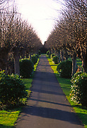 A3AAP8 Straight narrow road through pollarded lime trees and laurel bushes leading to a cemetery Wickham Market Suffolk England