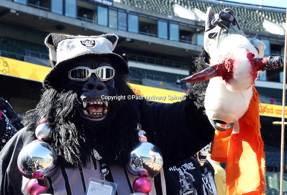 An Oakland Raiders fan wearing a gorilla suit holds up a fake horse head with a bloody dagger through the head during the Oakland Raiders 2015 NFL week 5 regular season football game against the Denver Broncos on Sunday, Oct. 11, 2015 in Oakland, Calif. The Broncos won the game 16-10. (©Paul Anthony Spinelli)