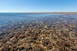 Extensive marine life is revealed on neap tides in the shallows of Montgomery Reef. On a falling tide the reef appears to rise from the ocean as water flows off the reef.  At 292km2, Montgomery is Australia's largest inshore reef.