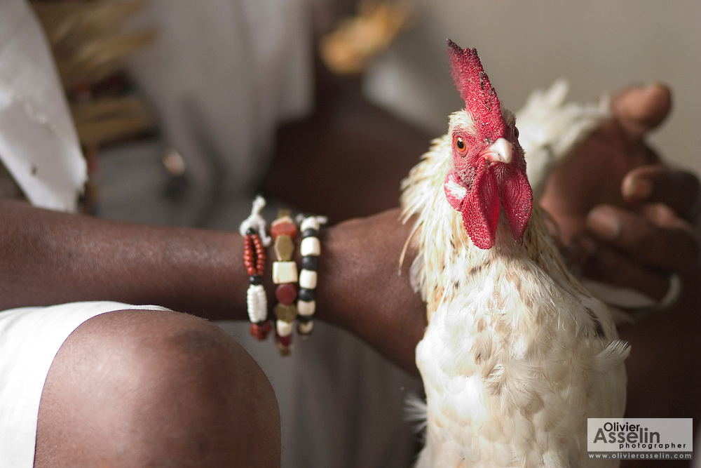 """Head priest about to sacrifice a chicken during a """"coming out"""" ceremony at a fetish shrine in Aflao, Volta Region, Eastern Ghana. A woman was released after spending three months in a small, dark room, hoping that she'd then be able to find a husband. Despite most Ghanaians being adamant followers of christianism or islam, many of them still maintain traditional beliefs. When facing a problem of any nature, some people will visit a local fetish shrine, looking for help. The main priest will consult the oracles and tell the person in need what has to be done for the problem to go away. People will typically be asked to """"serve"""" the shrine for weeks, sometimes months, as their families pay the priest for their upkeep."""