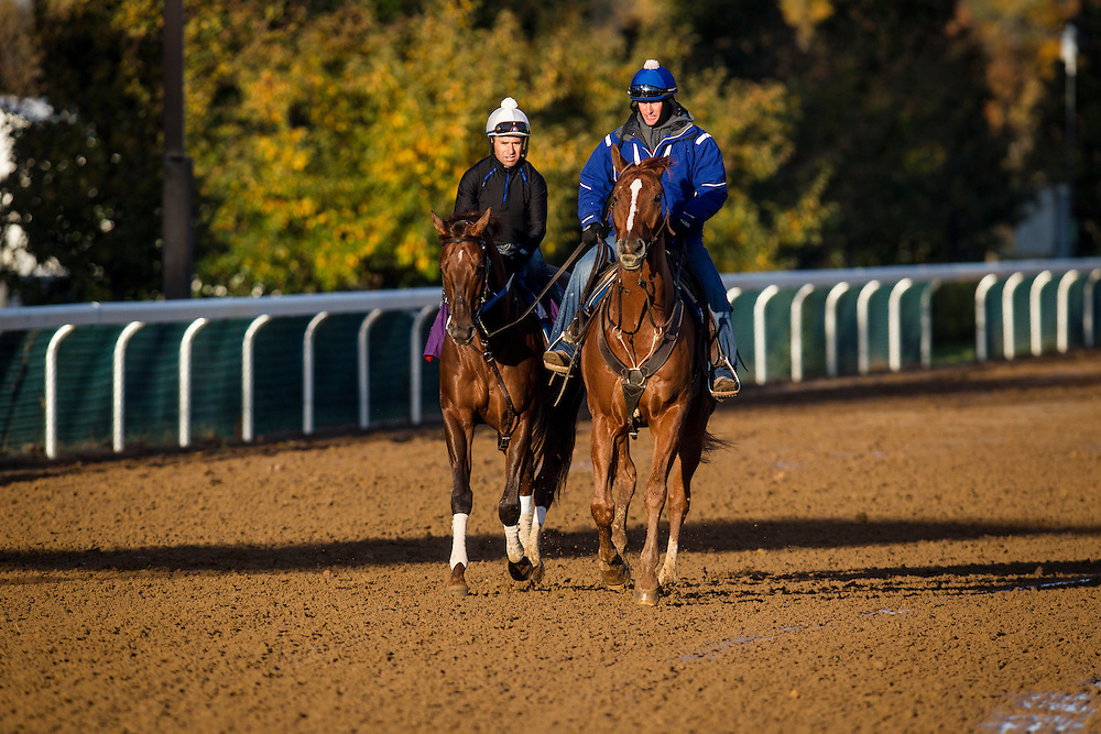 October 29, 2015:  Holy Boss, trained by Steven M. Asmussen and owned by Jerry Durant, exercises in preparation for the Breeders' Cup Sprint at Keeneland Race Track in Lexington, Kentucky. Alex Evers/ESW/CSM