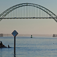 Sea Lions play and fight each other on the breakwater of the harbor at Newport, Oregon, as the majestic Yaquina Bay bridge on US 101 spans the background.