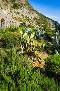 Cactus garden along the Via dell'Amore (The Way of Love), Riomaggiore, Cinque Terre, Liguria, Italy