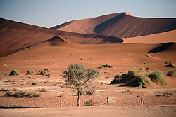 NAMIBIA SOSSUSVLEI 21APR14 - Entrance to the Deadvlei in the Sossusvlei in the Namib Desert, Namibia.<br /> <br /> Sossusvlei is a salt and clay pan surrounded by high red dunes, located in the southern part of the Namib Desert, in the Namib-Naukluft National Park, which is one of the major visitor attractions of Namibia.<br /> <br /> jre/Photo by Jiri Rezac<br /> <br /> © Jiri Rezac 2014