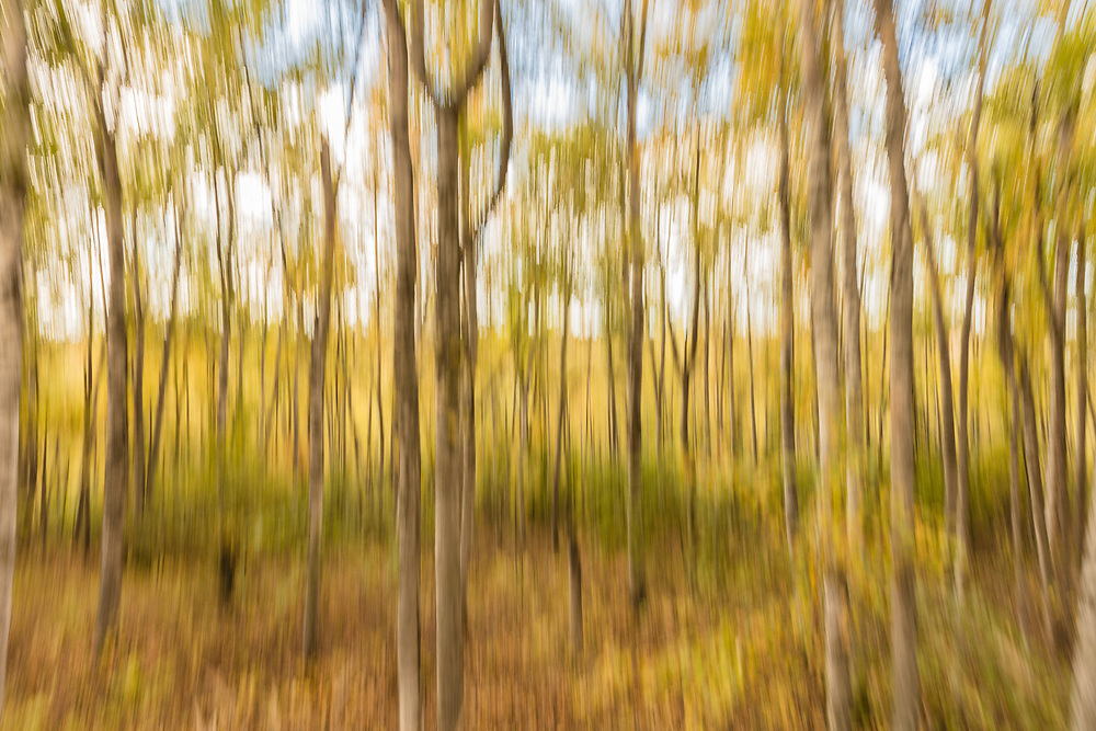Creative motion blur of fall foliage in Southcentral Alaska. Autumn. Afternoon.