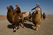 Mongolia. Caravans of Gengis Khan. , during the  camel festival in  Gobi desert in in cold winter. old painted chest  Bulgan -