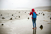 BORTH, WALES, UK 18TH AUGUST 2019 - Person walking on Borth beach amid the ancient sunken forest which appears at low tide. Known as 'the lowland hundred' or the 'sunken hundred,' the ancient tree stumps have been preserved by the sand and peat for thousands of years and are believed to be connected to the mythical kingdom of Cantre'r Gwaelod. Small areas were uncovered by extreme stormy weather in 2010 and 2014, but the majority were unearthed by Storm Hannah in 2019.