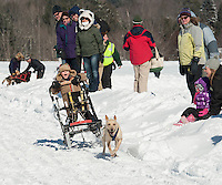 Youngsters got their chance to feel the thrill of a dog sled ride prior to Sunday's Open race at Laconia's 85th annual World Championship Sled Dog Derby.  (Karen Bobotas/for the Laconia Daily Sun)