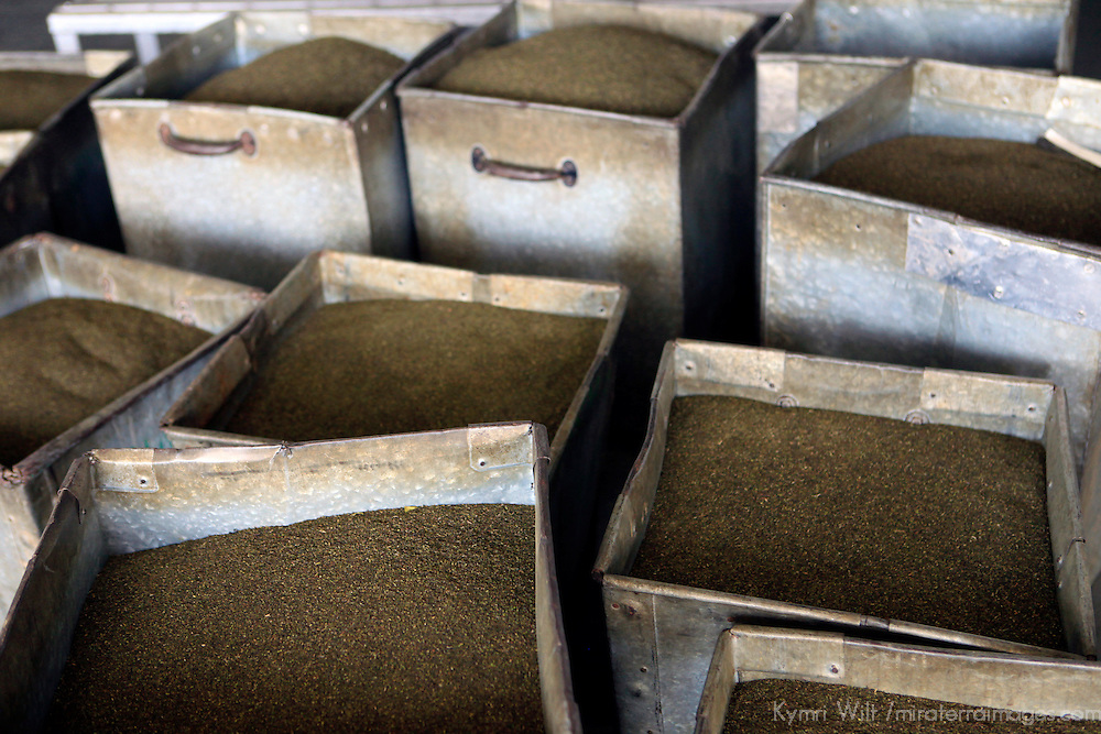 Asia, India, Darjeeling. Boxes of Darjeeling tea leaves await processing.