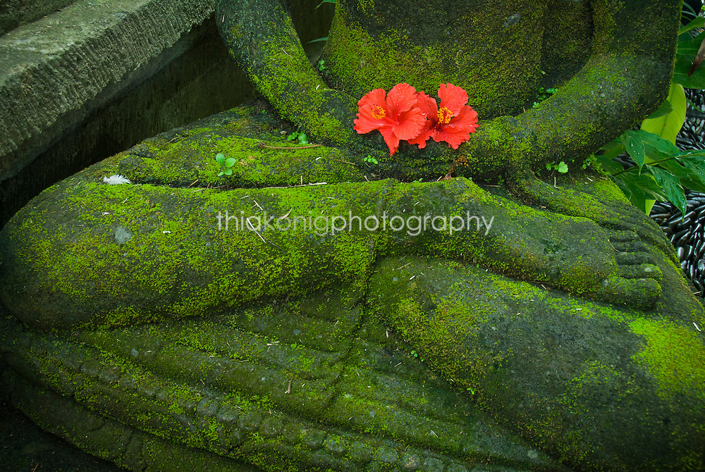 A red flower is placed as an daily morning offering in the palm of a green mossy Buddha statue, Ubud, Bali