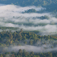 Mist eneveloping the rainforest, Gunung Silam, Sabah, Malaysia, Borneo, South East Asia.
