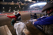 Italy, Voghera, Cowboys ranch: bareback riding.  .Cowboys show and contest.