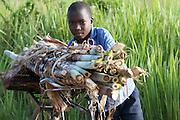 A yound boy pushing a bike with sugar cane on it.