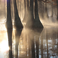 Trees - Not Mecklenburg County