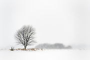 Danish Winter - Island of Funen, Denmark