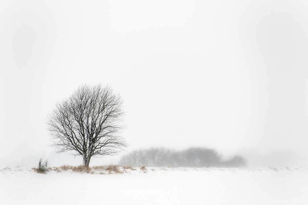 Danish Winter - Island of Funen, Denmark