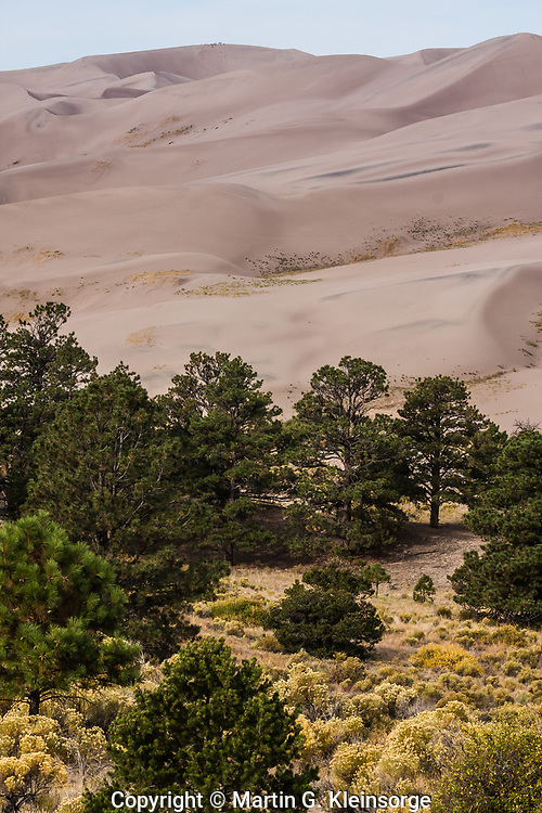 Rocky Mountain juniper and Pinyon pine trees cover the hills surrounding the Great Sand Dunes National Park & Preserve, Colorado.