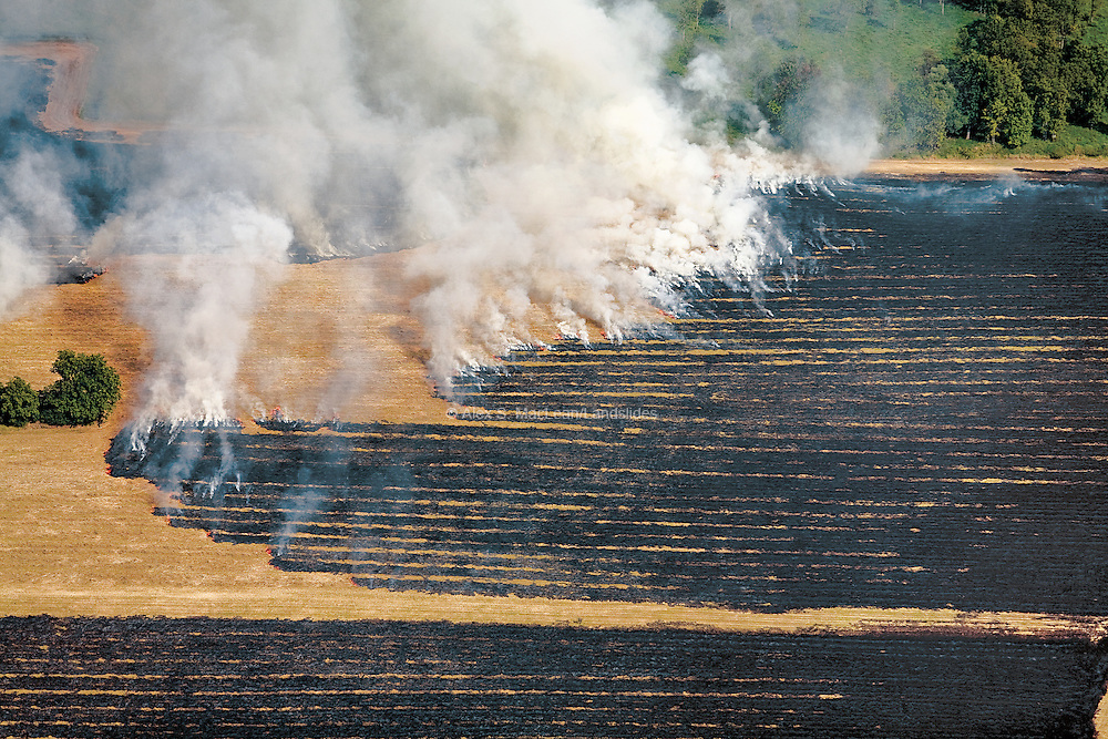 Deliberate agricultural burning after harvest controls pests and disease but is a controversial practice due to its impact on air quality.