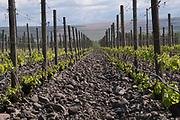 Cayuse Aramada Vineyard, Milton-Freewater, Walla Walla AVA, Oregon
