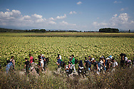 Idomeni, Greece - A group of refugees and migrants on their way to the Greek - Macedonian border, on the 24th of August 2015. Thousands of refugees (mostly coming from Syria) and migrants try every day to cross the Greek border to Macedonia (Fyrom), hoping to continue their journey to Central/North Europe and eventualy reach countries like Germany, Great Britain and Sweden.