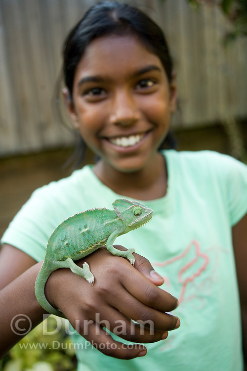 Nine year old Lucy Young holds a juvenile female veiled chameleon (Chamaeleo calyptratus). Fully released (92906LY)