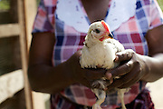 Linna Kinabo holding a young chicken. <br /> <br /> Linna set up and now runs a poultry business selling both eggs and meat.<br /> <br /> She attended MKUBWA enterprise training run by the Tanzania Gatsby Trust in partnership with The Cherie Blair Foundation for Women.