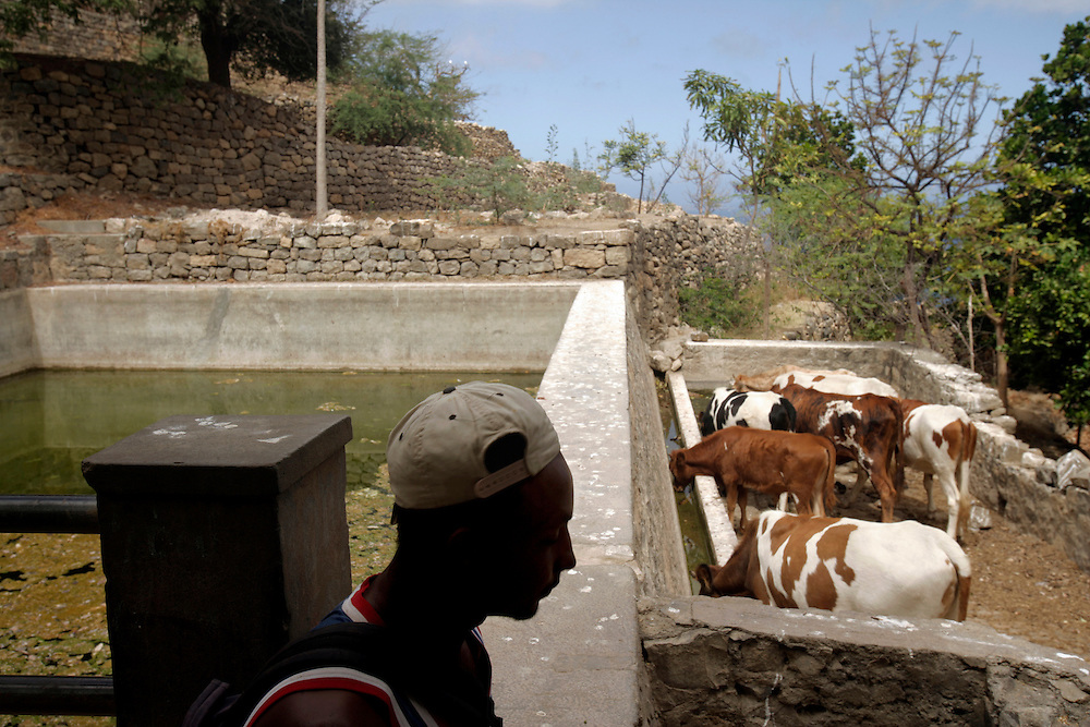 A shepperd waits for the cattle to refresh in the abandoned village of Vinagre in Brava's east coast. Vinagre is so called because of the acid fountain water that reminds vinegar.