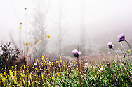 Morning fog in Topanga Canyon during the peak of wildflower season.  Not a bad place to be hiking.  This is on Deerhill Trail.