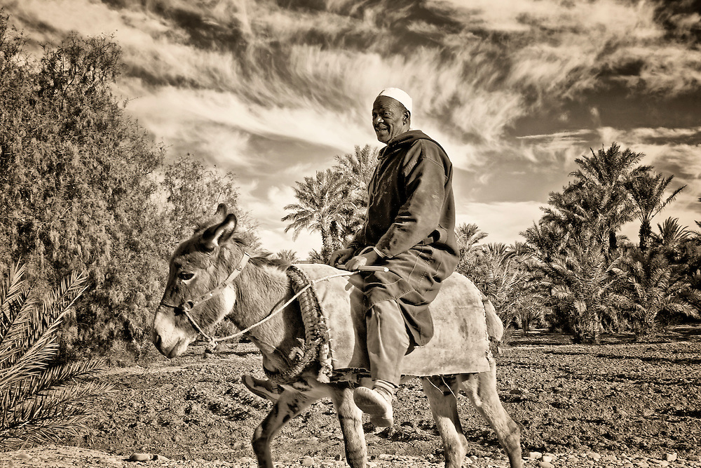 Man with donkey in an oasis in the Draa Valley.