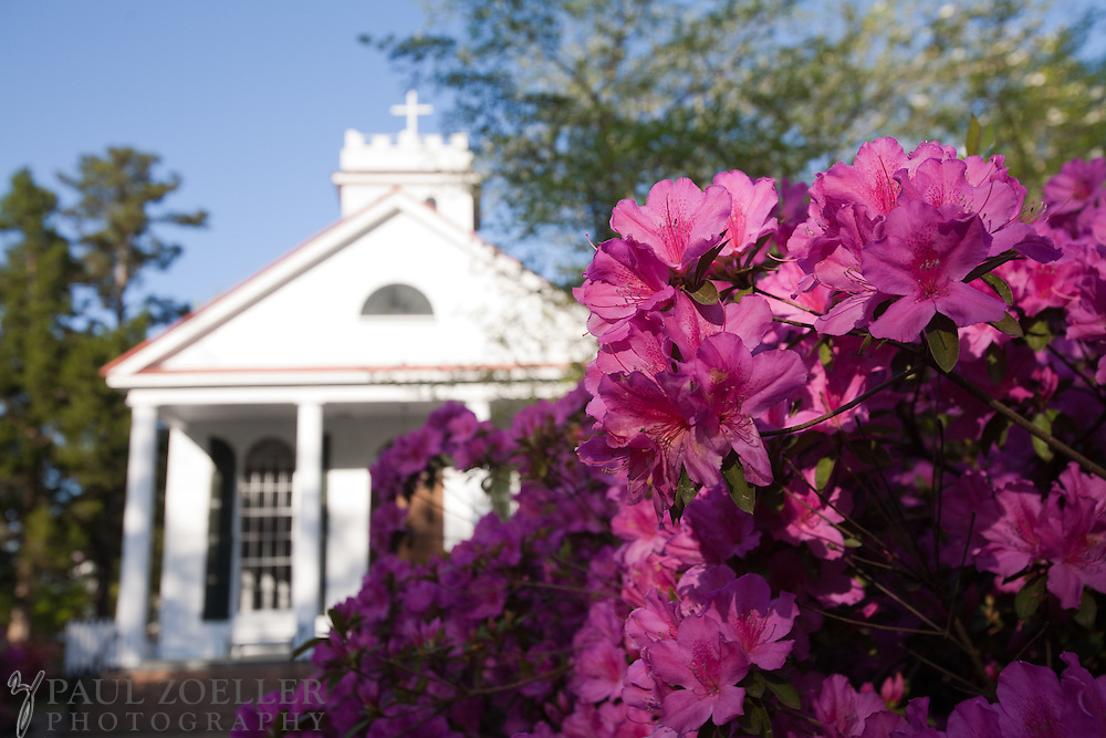 Azeleas bloom at St. Paul's in Summerville, SC.