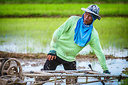 A Thai farmer is plowing the fields to get ready for transplanting rice in Nakhon Nayok, Thailand. PHOTO BY LEE CRAKER